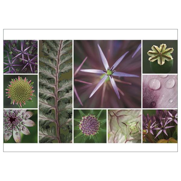 "Postkarte ""Sterne, lila"""