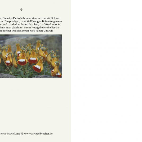 "Klappkarte ""Calceolaria"" Innenseite"