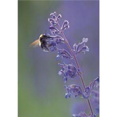 "Klappkarte ""Bienen"" Vorderseite"