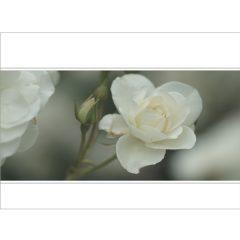 """Klappkarte """"Weiße Rose"""", Vorderseite"""