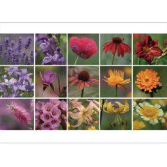 Postkarte 'Bunte Blüten'