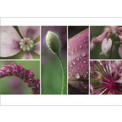 """Postkarte """"Sommer, rosa"""""""