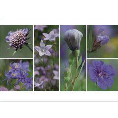 "Postkarte ""Sommer, lila"""