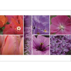 "Postkarte ""Rot & Pink"""