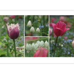 "Postkarte ""Tulpen/Tränende Herzen"""