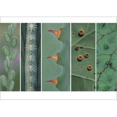 """Postkarte """"Bizarre Botanik"""""""