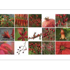 "Postkarte ""Rot & Grün"""