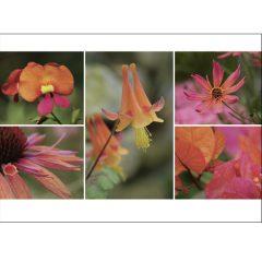 """Postkarte """"Sommer, rotorange"""""""