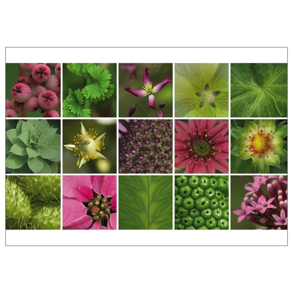 """Postkarte """"Sterne, rosa"""""""