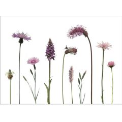 Postkarte 'Rosa Blüten'