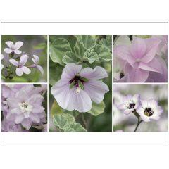 """Klappkarte """"Rosa Blüten"""""""
