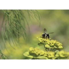 "Postkarte ""Euphorbia"""