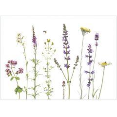 """Postkarte """"Insektenpflanzen"""""""