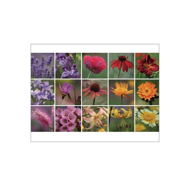 "Minikarte ""Bunte Blüten"""