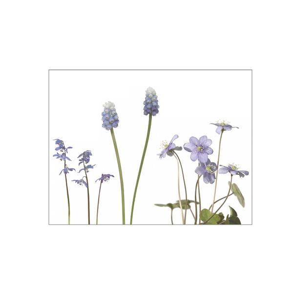 """Minikarte """"Frühlingsblau"""""""