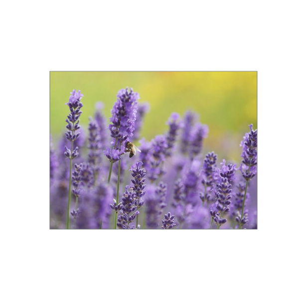 "Minikarte ""Lavendel mit Honigbiene"""
