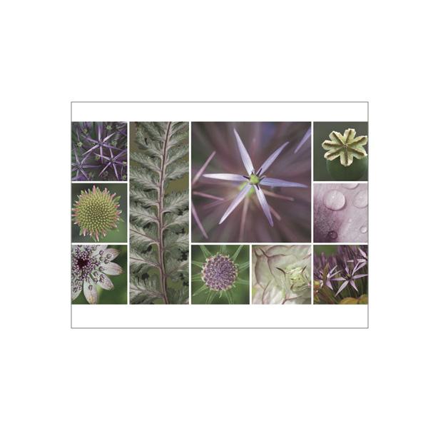"""Minikarte """"Sterne, lila"""""""