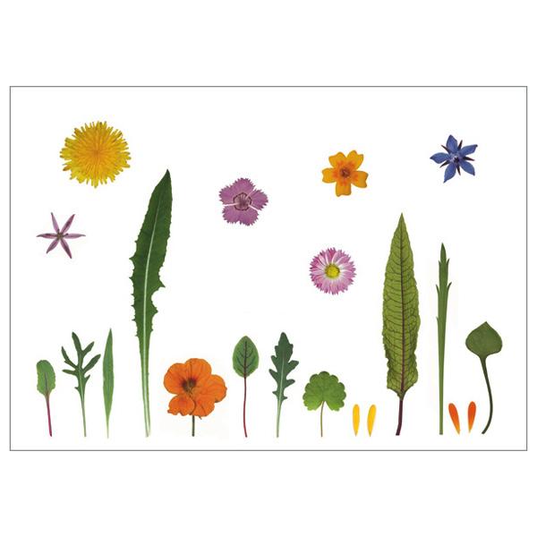 """Postkarte """"Blütensalat"""""""