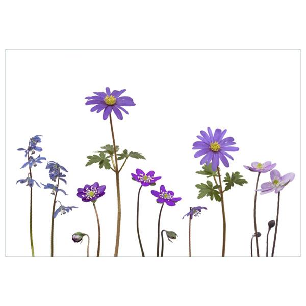 "Postkarte ""Blaue Frühlingsboten"""
